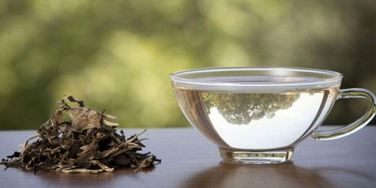 کدام چای در تابستان کشنده است + جزئیات